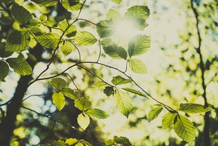 Green leaves and sunlight