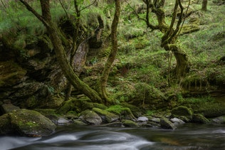 Elder Forest of Twisted Trees next to a River