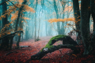 Dreamy autumn forest in fog. Mystical foggy trees in fall