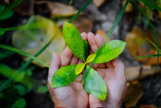 Female hands holding spring sprout seed tree on blurred background. Environment concept